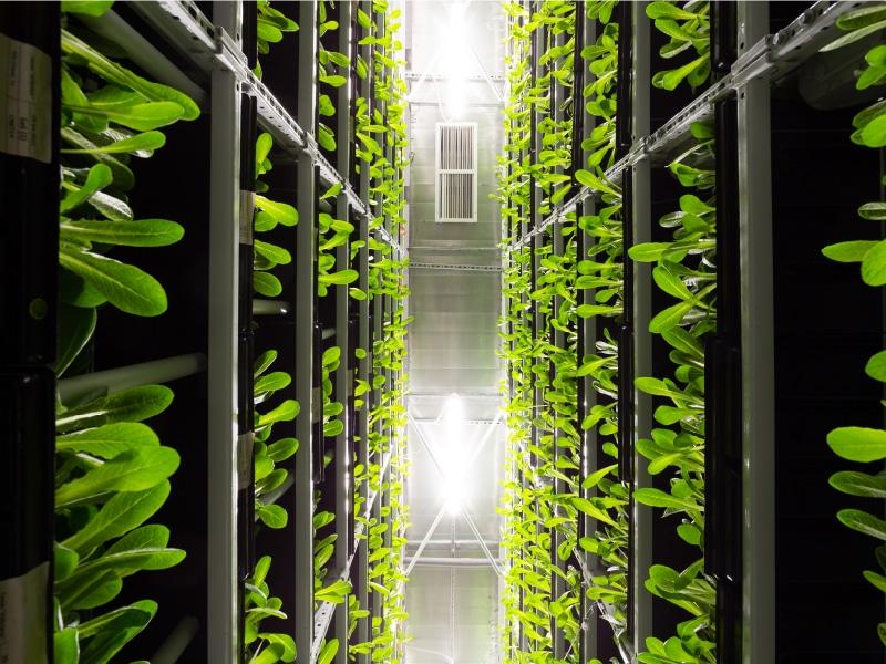 Le Green IT, nouvel enjeu pour les éditeurs de logiciels